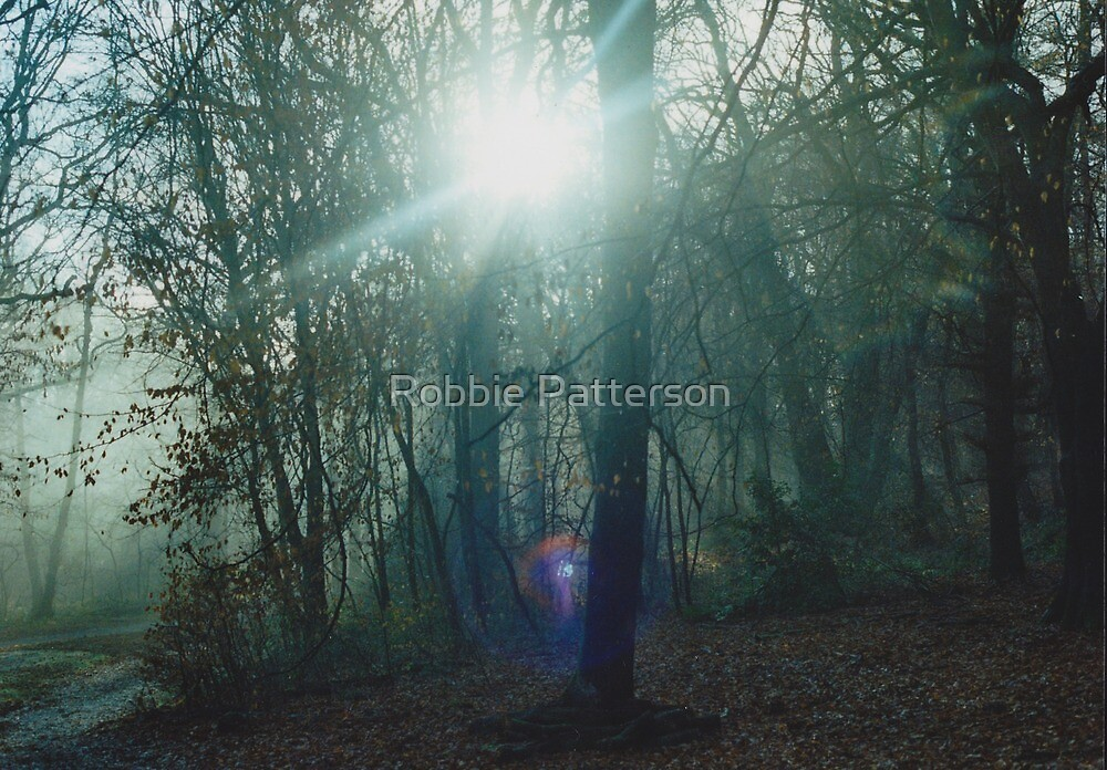 Mist In The Woods 1 by Robbie Patterson