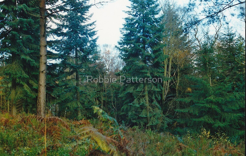 Open Woods 3 by Robbie Patterson