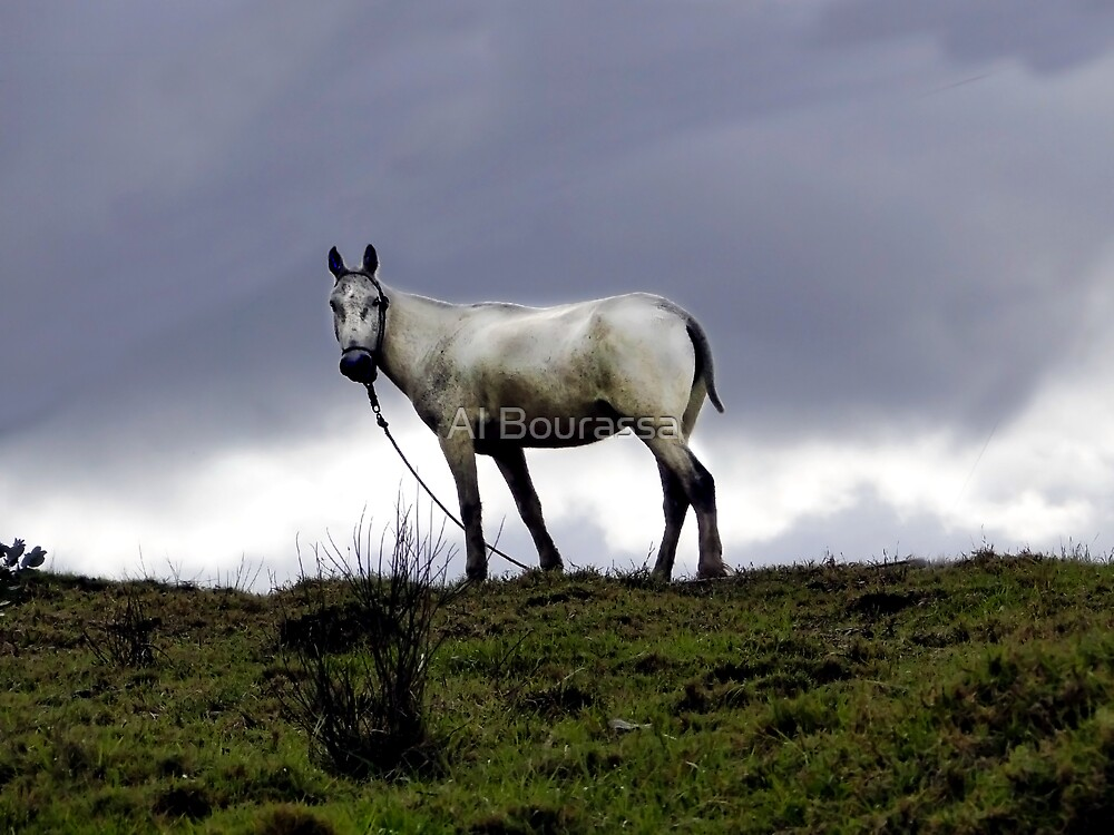 El Valle Horse by Al Bourassa