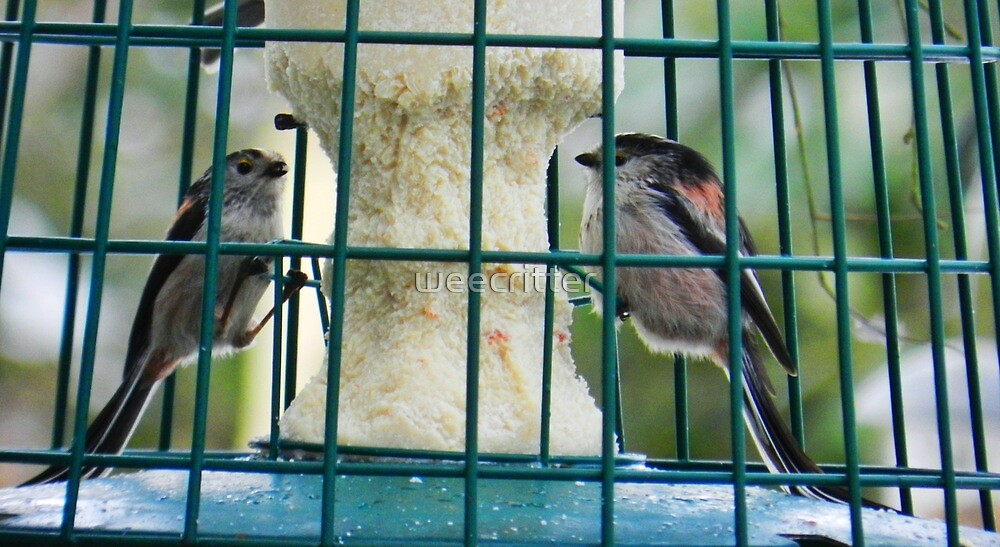 Long Tailed Tits by weecritter