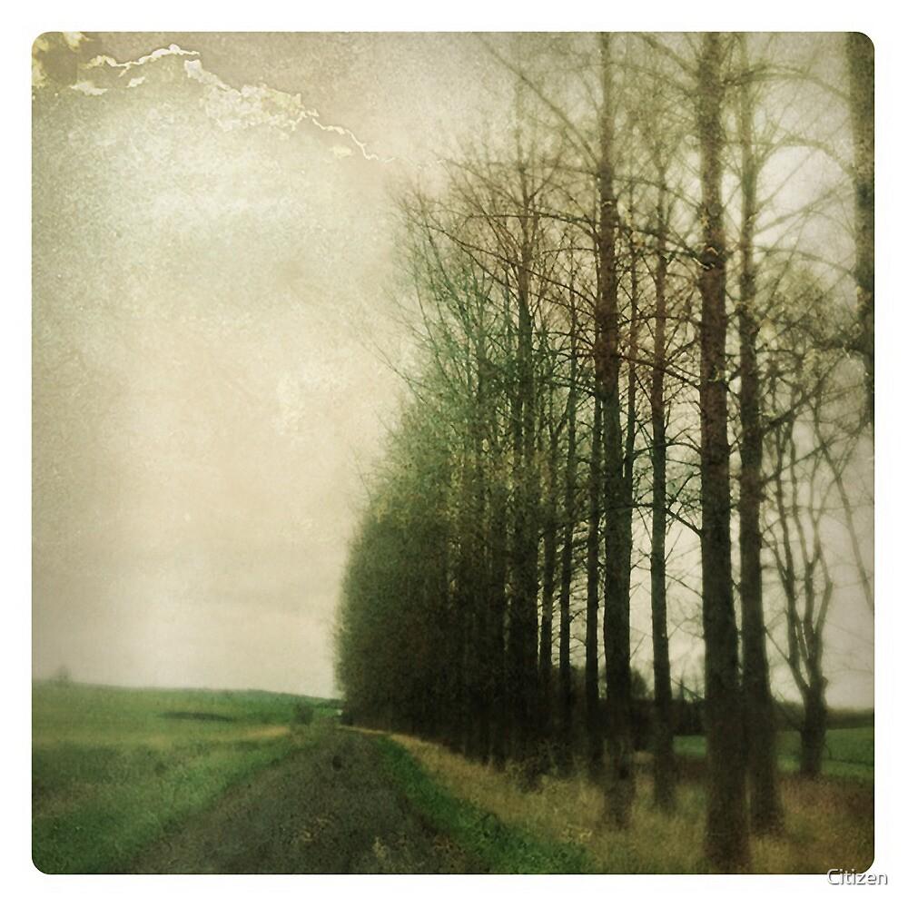 Memory Lane by Nikki Smith (Brown)