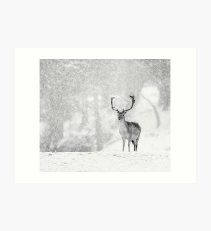 A Stag In The Snow Art Print