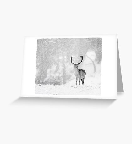 A Stag In The Snow Greeting Card