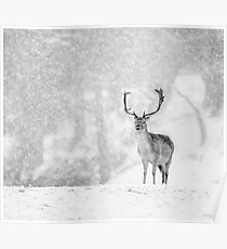 A Stag In The Snow Poster