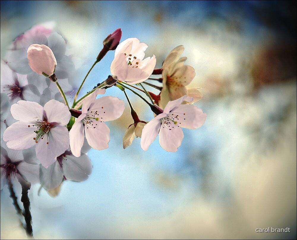 spring by carol brandt