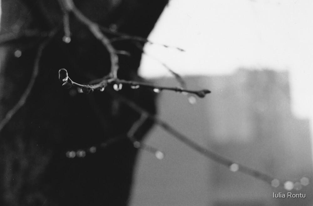 Suspension by Iulia Rontu