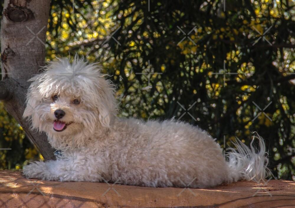 A Poodle? by Heather Friedman