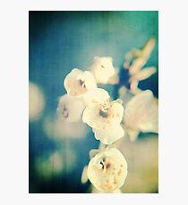 Cherryblossom a la Chinoise Photographic Print