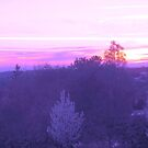 Purple and Pink Spring Sunset by artqueene