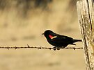 Red Wing Blackbird by Betty  Town Duncan