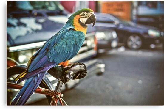 East Village Parrot by jazzwall