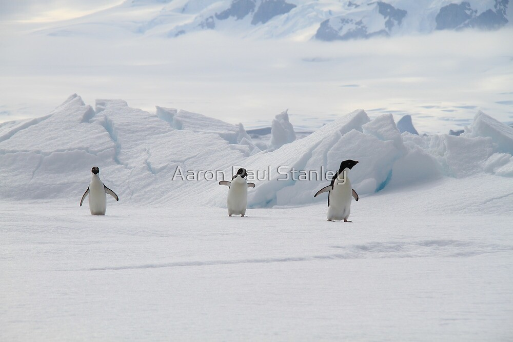Penguin Parade by Aaron Paul Stanley