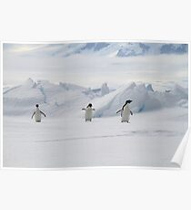 Penguin Parade Poster