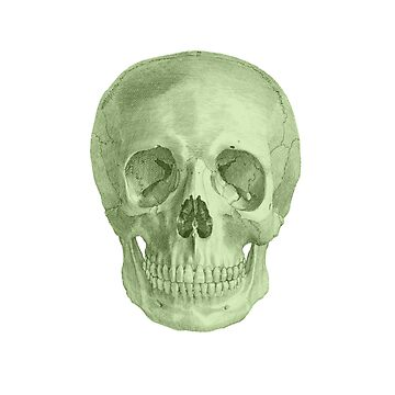Albinus Skull 03 - Zombie Attack - White Background by sivieriart