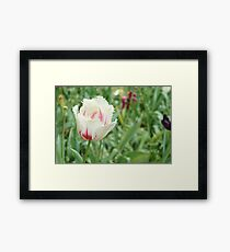 Lonely Tulip  Framed Print