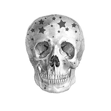 Albinus Skull 06 - Wannabe Star - White Background by sivieriart