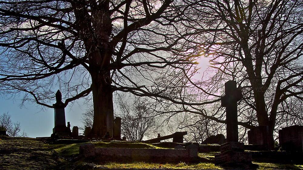 Sunlit Caress by John Thurgood