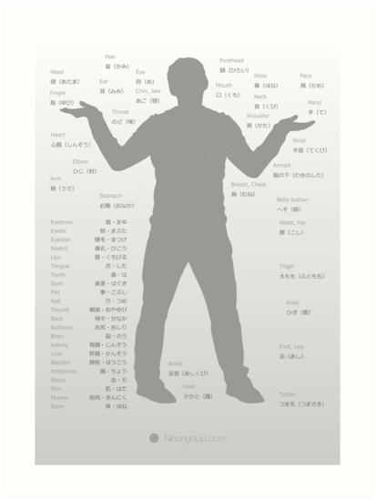 Japanese body parts cheat sheet & poster by Philip Seifi