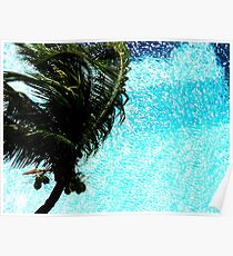 Palm and Pool Poster