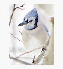 I'm Blue Over You Photographic Print