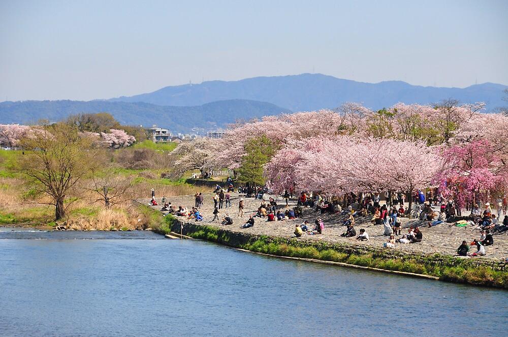 Cherry Blossom by bryaniceman