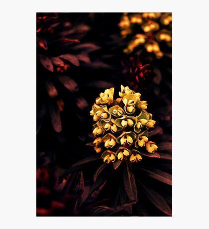 Nature's Jewels Photographic Print