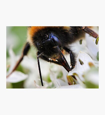 Bee nice to me or else....... Photographic Print