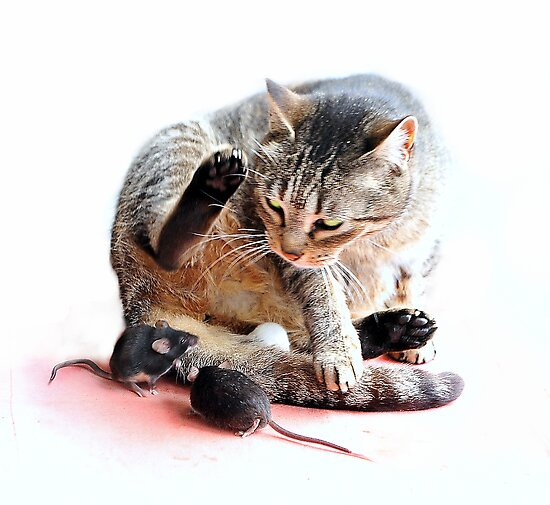 Playing cat and mouse by Alan Mattison