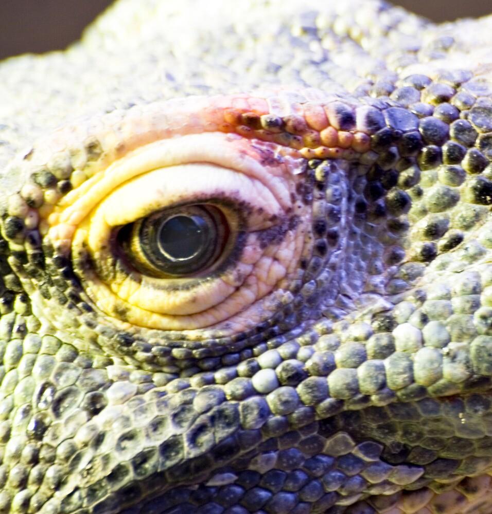 Dragons eye by Norma Cornes
