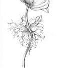 Drawings by Barbara Wyeth