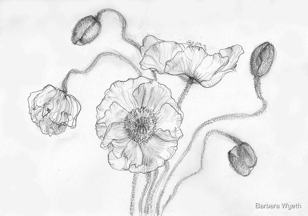 Iceland Poppies by Barbara Wyeth