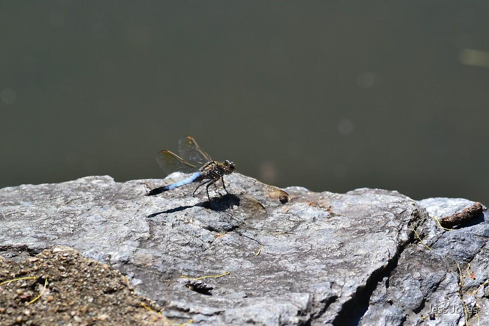 Resting Dragonfly by Jess Jones
