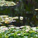 Lilys by Glen Johnson