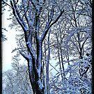 Ice Storm by Sandra Hopko