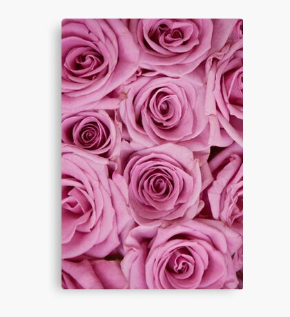 Southern Belle - pink roses Canvas Print