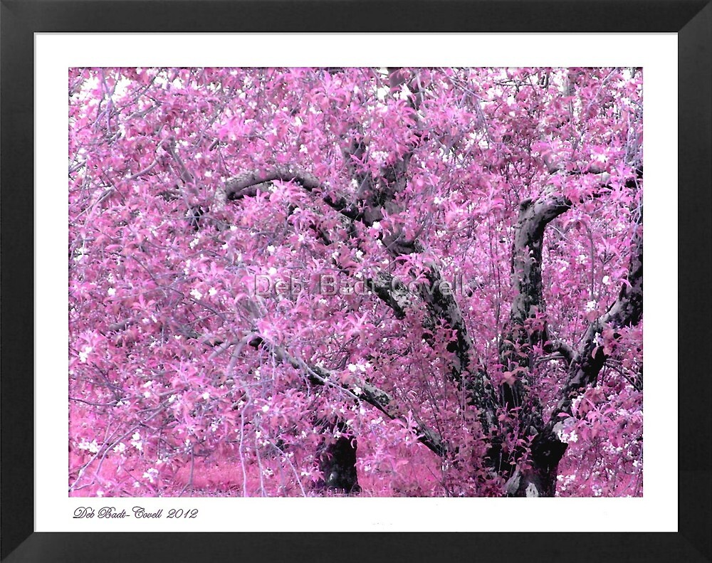 """Pink Apple Blossoms on the Ridge"" by Deb  Badt-Covell"