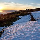 Sunset, snow and sheep by Greg  Walker