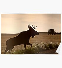 Prairie Moose Poster