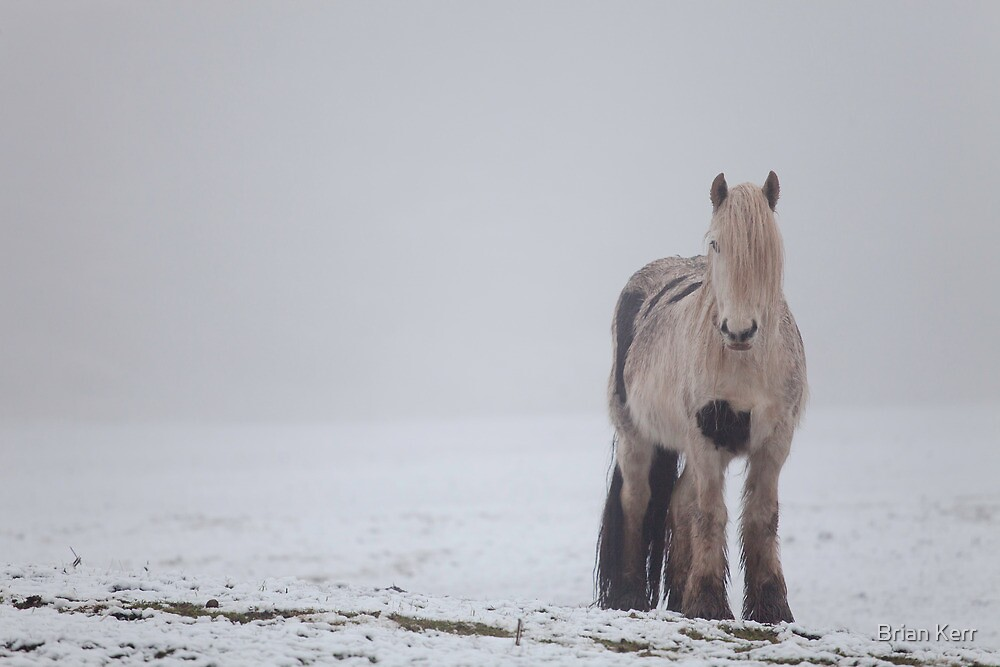 Standing In Snow by Brian Kerr
