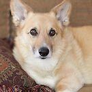 Kabo On His Pretty Sofa ~ by Renee Blake