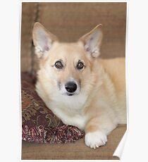 Kabo On His Pretty Sofa ~ Poster
