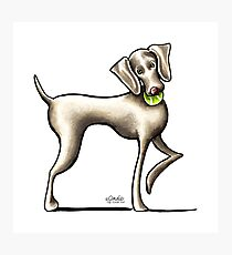 Weimaraner Playtime Photographic Print