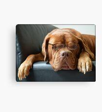 Bordeaux Dog Canvas Print