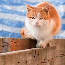 Orange tomcat against striped background by wildrain