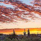 Colorful Sonoran Desert Sunrise by Bo Insogna