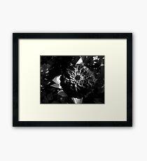 Superb Zinnia Framed Print