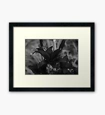 Dark Lily Framed Print