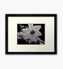 Lily of the Amazon Framed Print