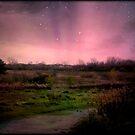 Evening Magic © by Dawn Becker