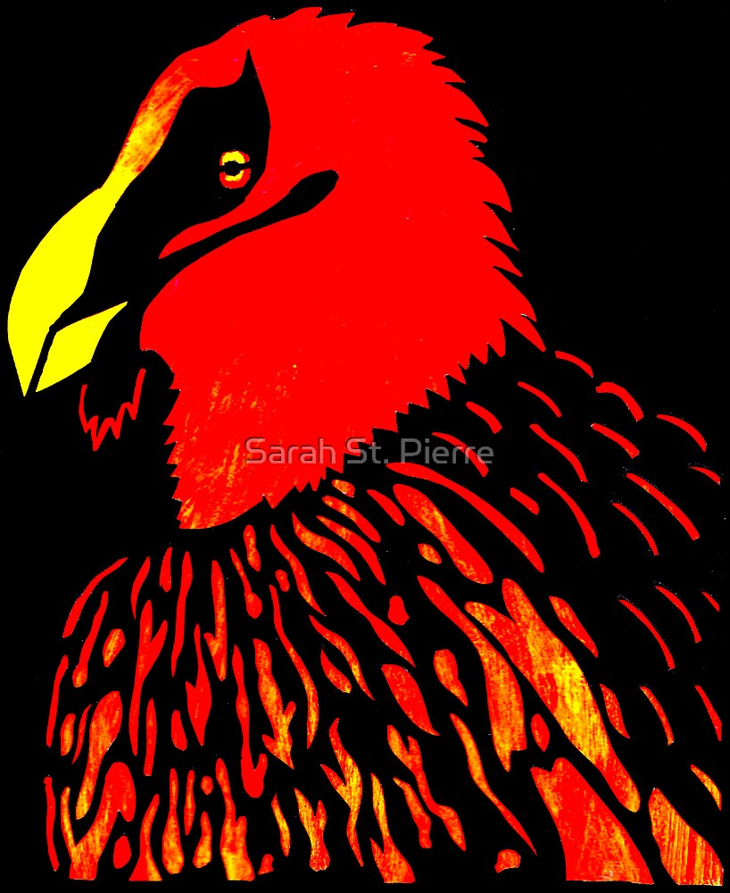 Bearded Vulture by Sarah St. Pierre